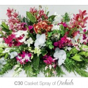 casket spray of orchids