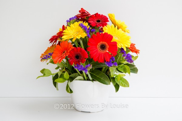 pot of gerberas
