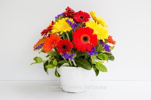 Pot of Gerberas Large Gerberas + Mini Gerberas in a Round Arrangement